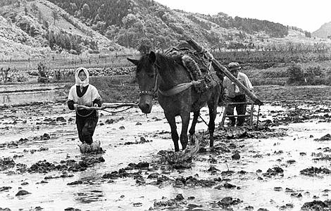 昭和30年代の農耕馬