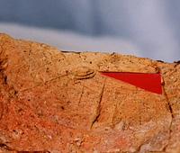 籾痕付着土器
