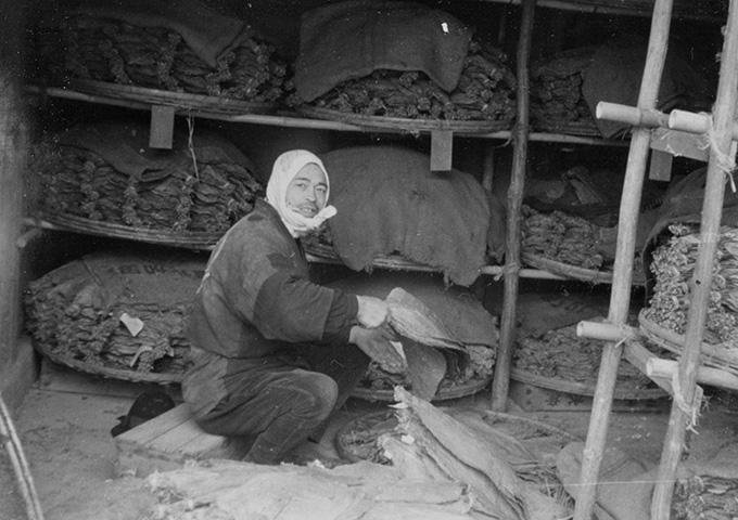 岩手県南地域の葉たばこ生産